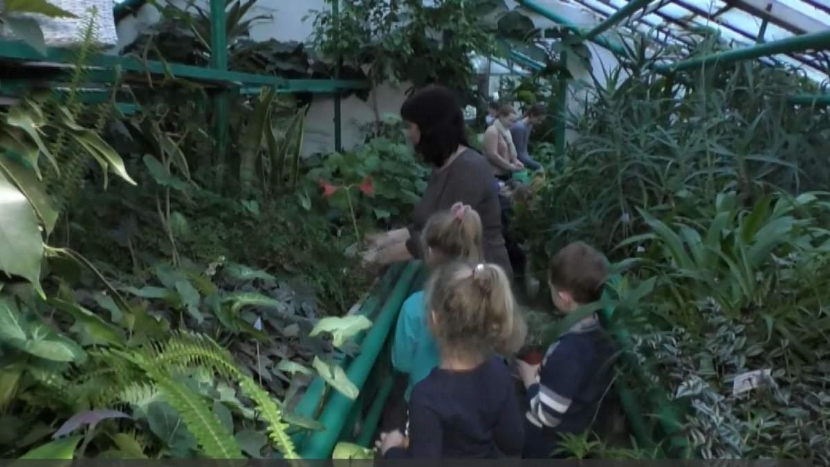 Манго и гуава: на Черкасщине школьники выращивают экзотические растения – впечатляющее видео