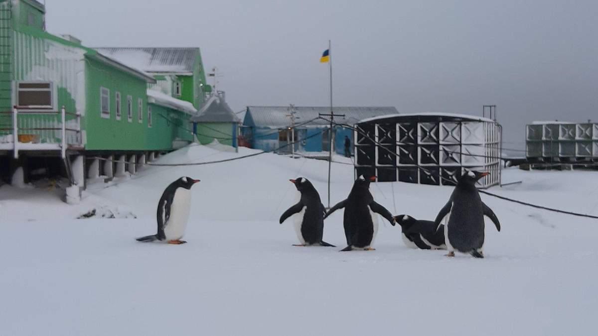 Стартував конкурс привітань полярникам від школярів: як взяти участь та отримати приз