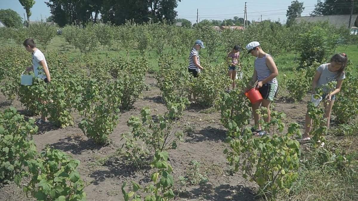 Дети в школах и садиках в Винницкой области заготавливают еду на зиму