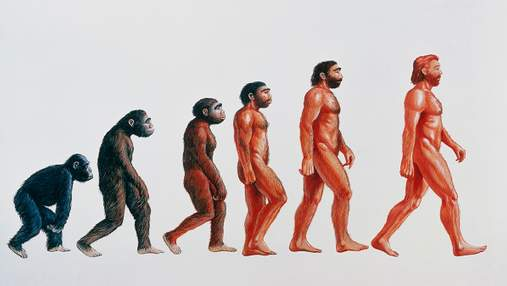 Чому люди ходять на двох ногах: 6 теорій від науковців