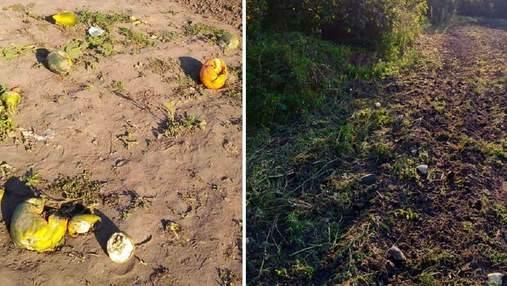 Попри біль й обмеження через хворобу: на Черкащині дітей змушували на уроках збирати врожай