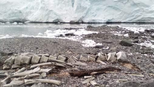 """Ученые разгадали секреты кита, останки которого годами лежат возле станции """"Вернадский"""""""