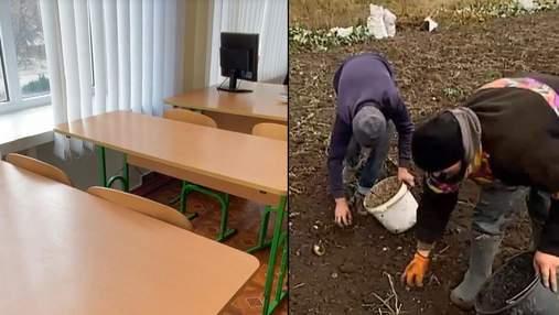 Нет интернета: в Ровненской области школьники вместо дистанционного обучения копают картошку